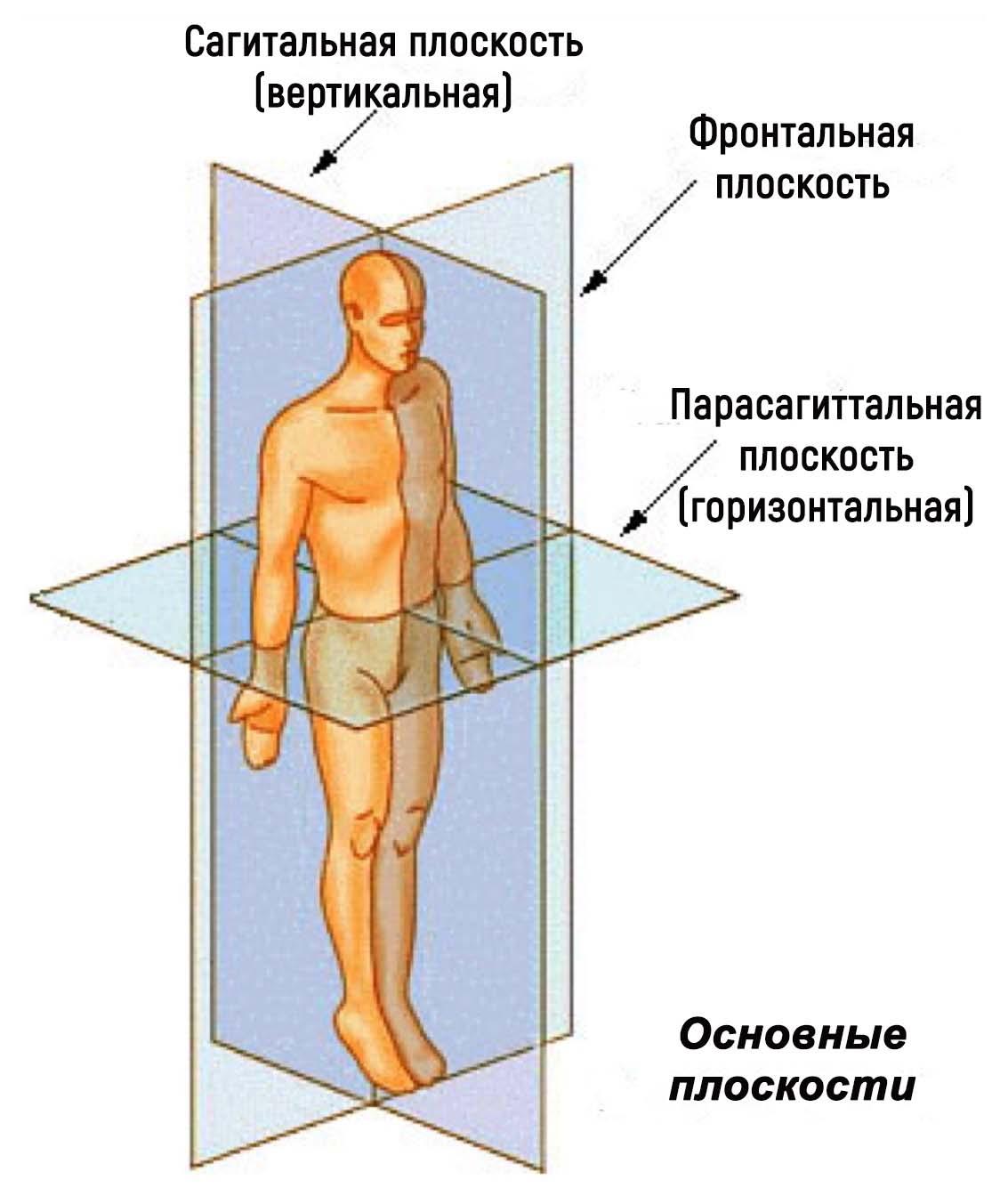 Анатомия ЦНС для психологов. Анатомическая терминология