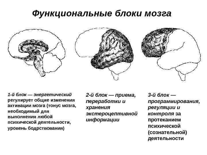 Основные направления психологии ХХ века